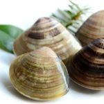 ハマグリのイメージ画像:食べ物辞典トップ用