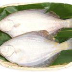 カレイ(鰈)のイメージ画像:食べ物辞典トップ用