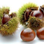 栗のイメージ画像:食べ物辞典トップ用