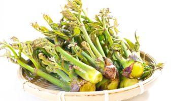 タラの芽のイメージ画像:食べ物辞典トップ用