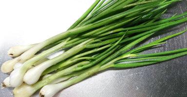 ワケギ(分葱)のイメージ画像
